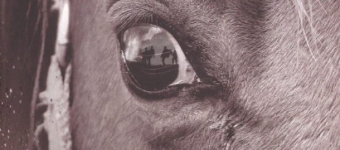 spielbergs-neste-film-er-war-horse