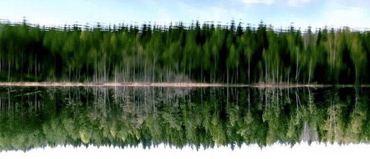 Skog, tarmer og slemme barn i Grimstad