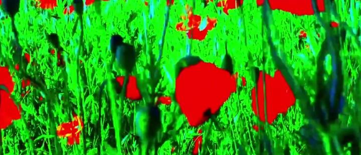 Flimmeret er hentet fra Jean-Luc Godards «Audieu au langage», som vises under festivalen.