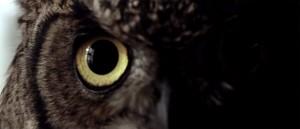 friluftens-uhygge-og-norsk-horror-returnerer-i-fersk-teaser-til-villmark-2