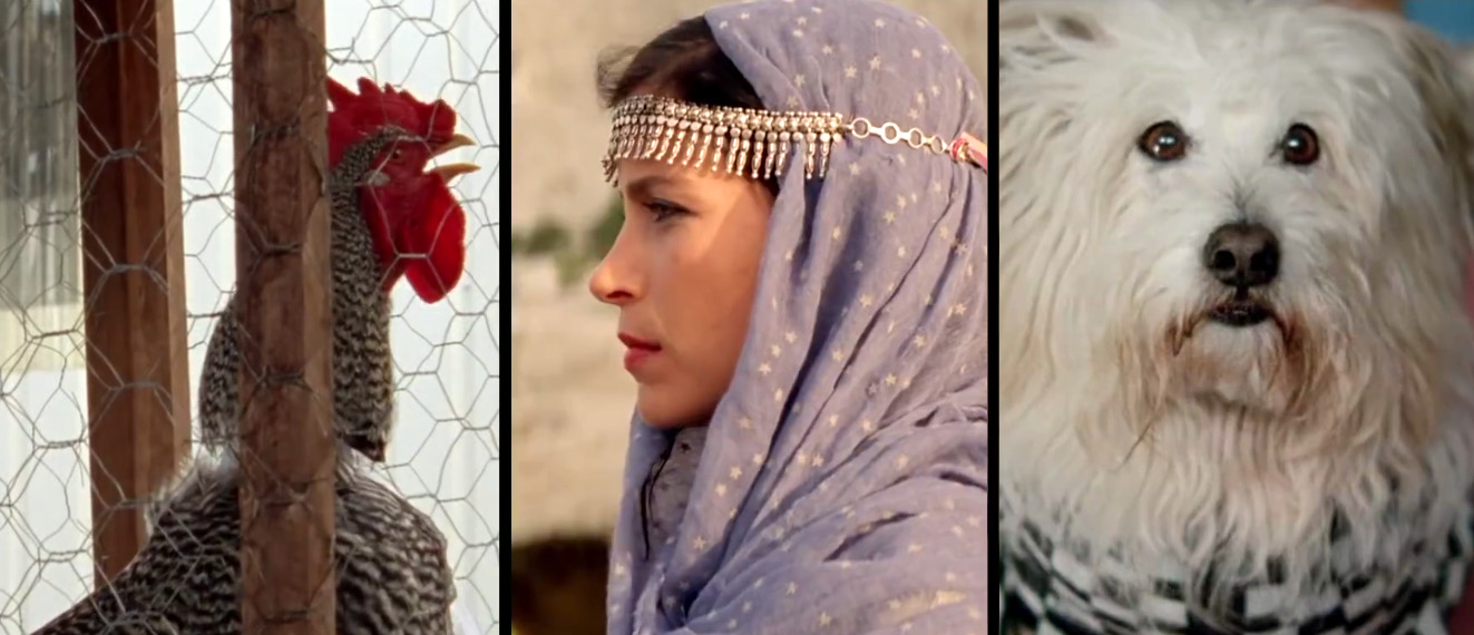 «Arabian Nights»