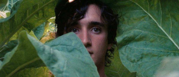 Filmfrelst #304: Alice Rohrwachers Lykkelige Lazzaro